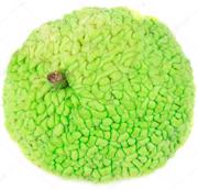Плод маклюра